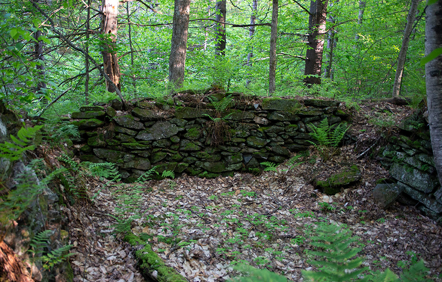 The stone foundation of a historic cabin in Hawk's Hill Demonstration Forest